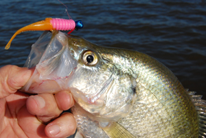 photo of caught Crappie